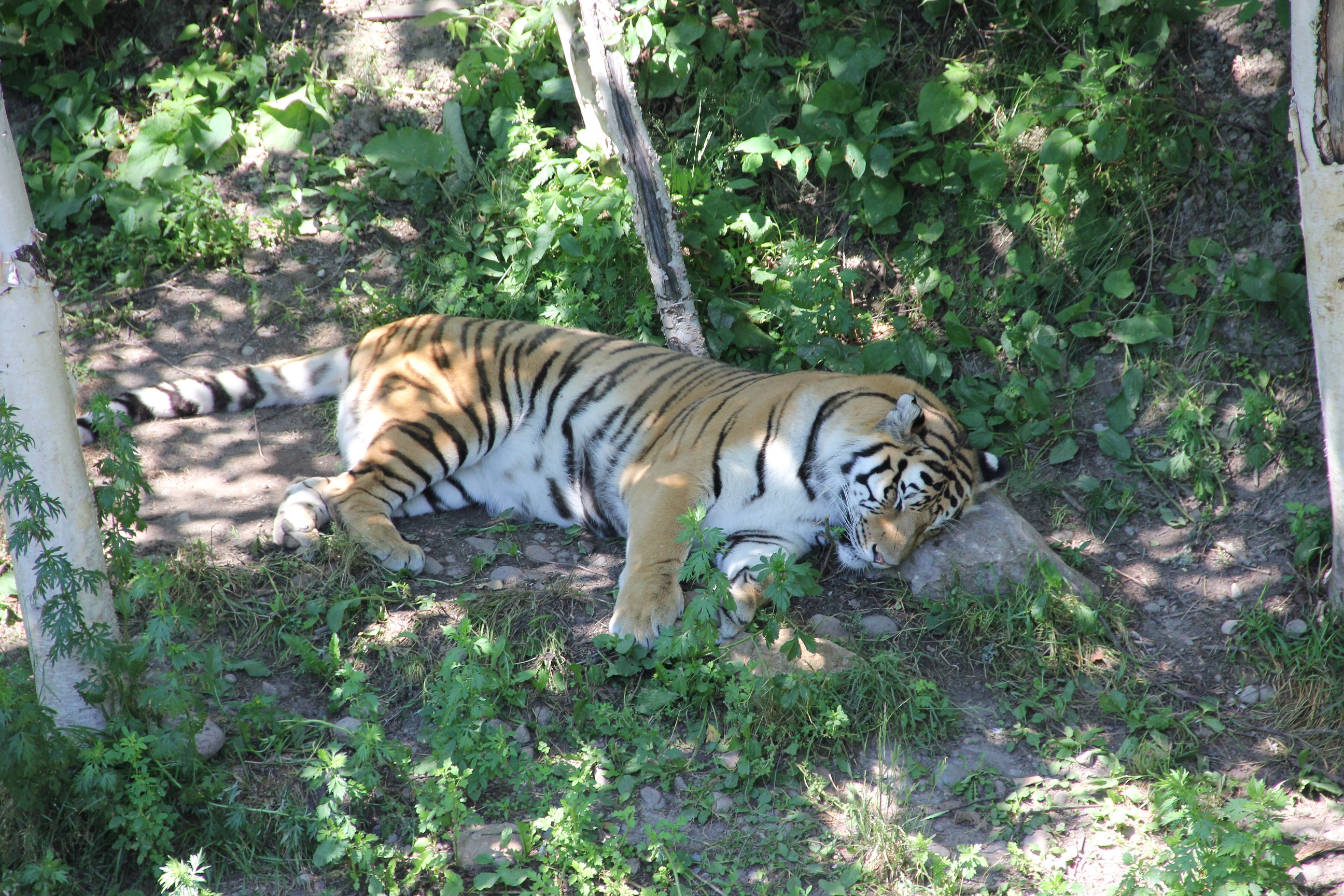 Zoo Sauvage