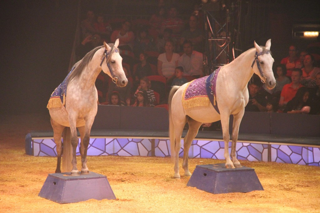 BigAppleCircus-horses