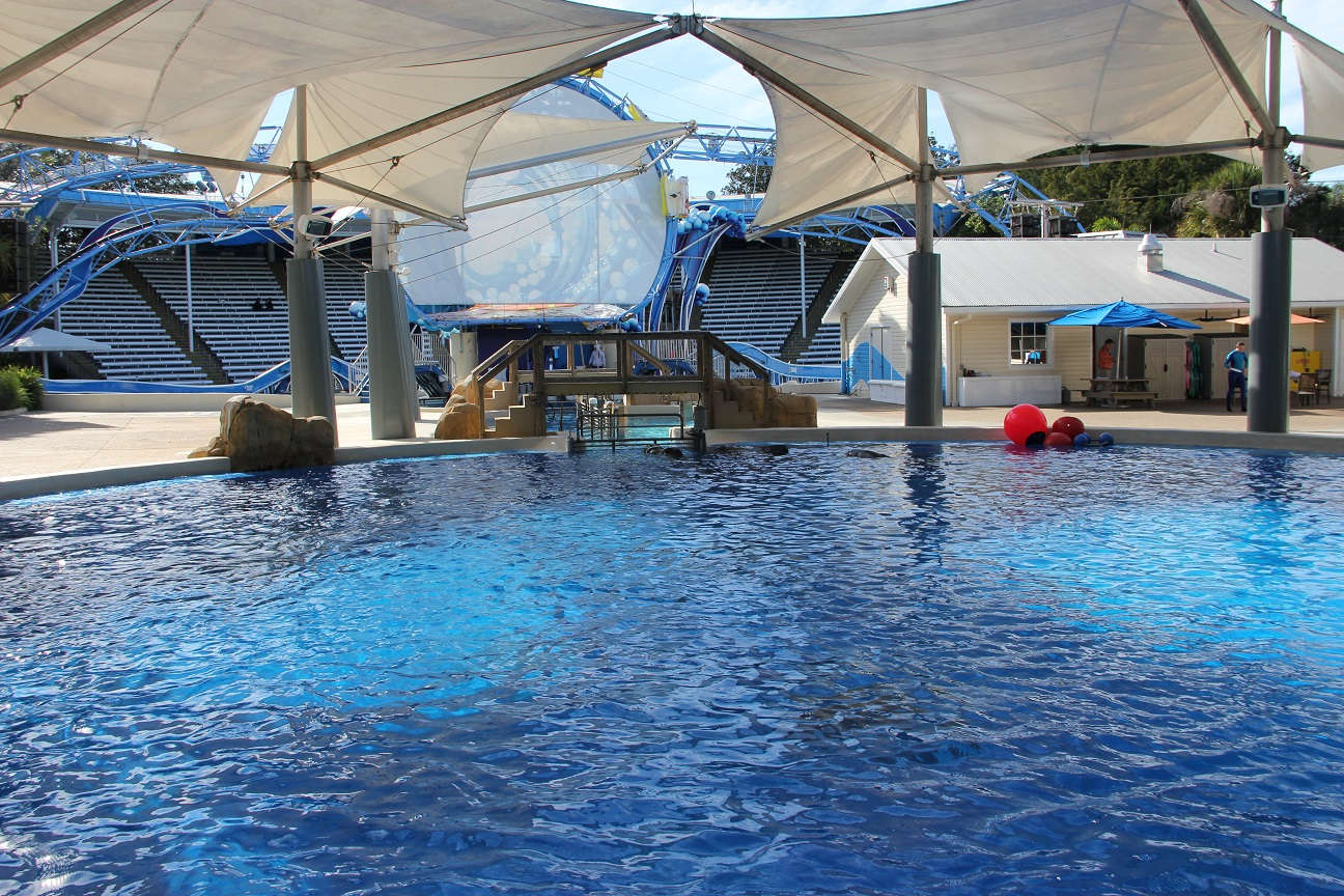 5 questions with a seaworld dolphin trainer the for Pool show orlando 2015