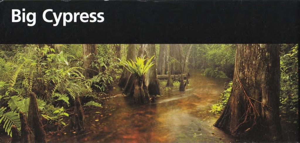 BigCypress