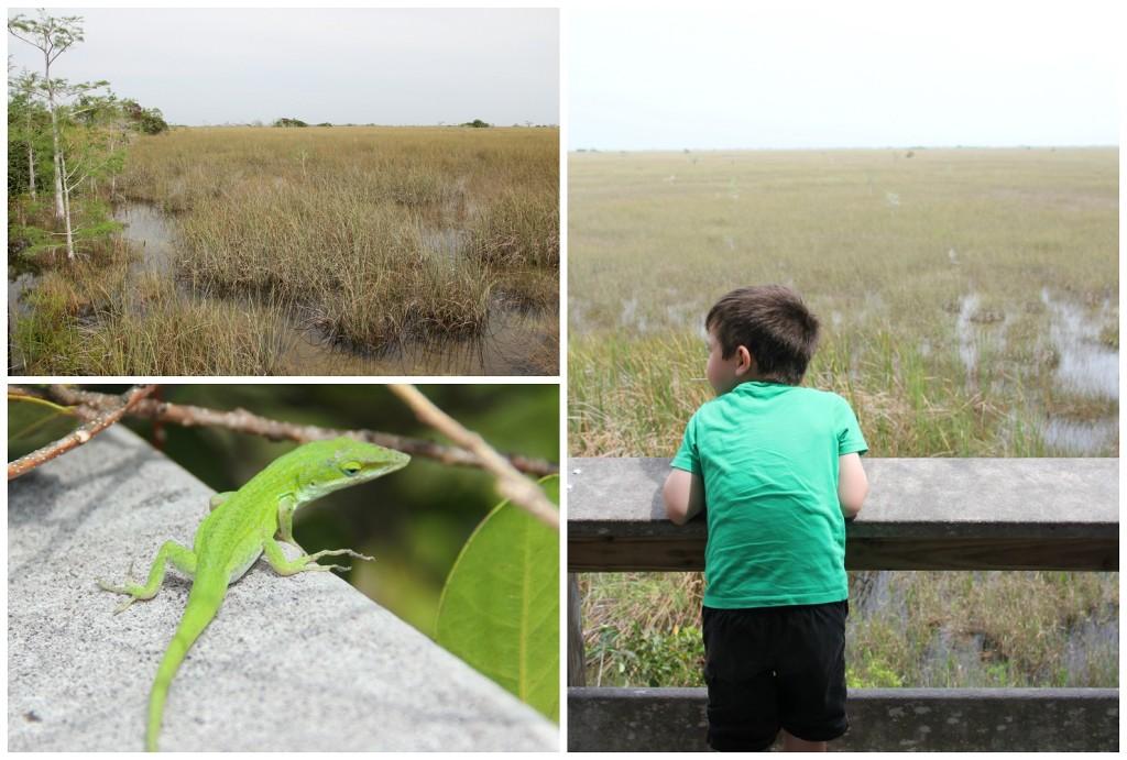 Everglades10