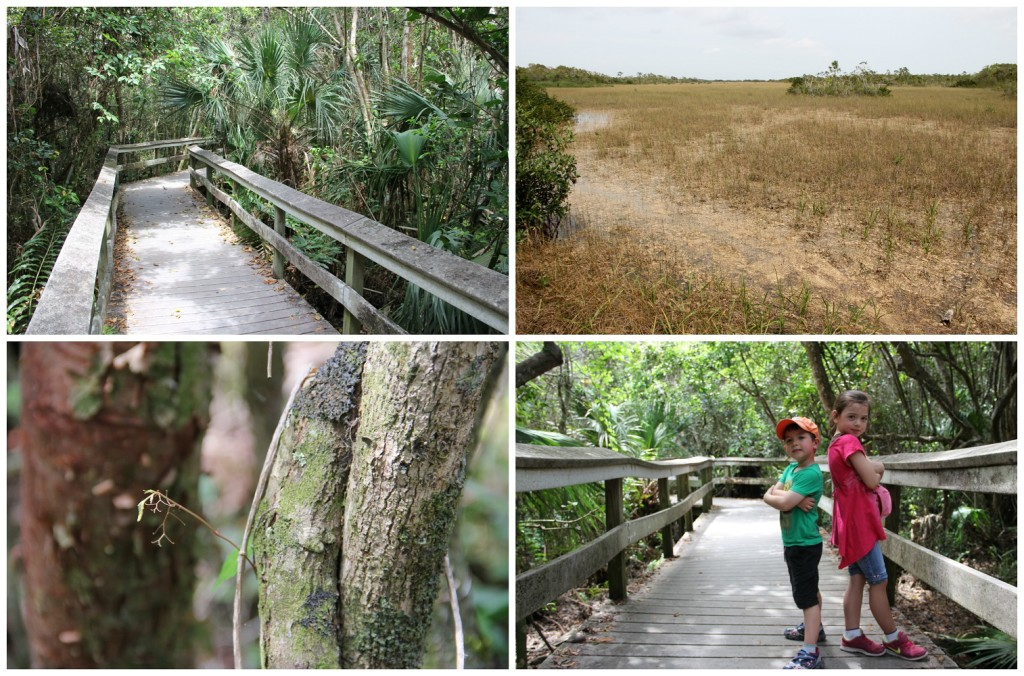 Everglades11